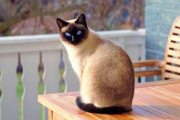 Jak zabezpieczyć okno przed kotem?